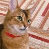 石川町駅から猫カフェ『れおん』への道順と、感想。【保護猫カフェ】