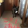 甲斐犬サン、狩猟解禁す❗️の巻〜アレ、禁猟デショ¿(・・)?