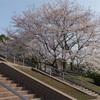 竜王公園でお花見、バーベキュー場 テニスコート 卓球場 ドッグランもあります