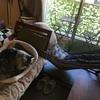 妻と猫にソファーを奪われたので、自立式ハンモックで昼寝してみたらソファーより寝心地がよかった!