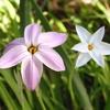 庭の春の花5