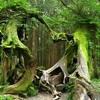 【謎】ホイア・バキュー ルーマニアの呪われた森⁉