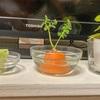 テレビ前の植物たち
