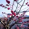 湯島天神の梅まつりへゆるゆると散歩しに #アラサー女会