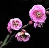 季節の花 (令和三年一月 Ⅱ)