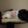 今日の黒猫モモ&白黒猫ナナの動画ー650