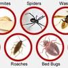 pest control company in riyadh