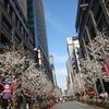 お江戸日本橋、COREDO室町、桜満開です◎