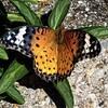 今日の景色 06/30 蝶