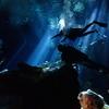 メキシコに行ったらセノーテでダイビングするべき!(=゚ω゚)ノプラヤデルカルメン・カリブ海・シカレ・エクスプロール等々