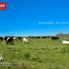 【八ヶ岳】美ヶ原、穏やかな時間が流れる雲上の牧場を歩く、牧場登山の旅