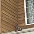 窓の外にアライグマがいるのを発見