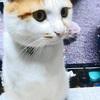 「祭猫文」の風流猫