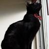 今日の黒猫モモ&白黒猫ナナの動画ー583
