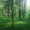 488日目:木を見て森も見ていますか?