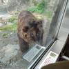 【北海道旅行2021】クマやら運河やら【2日目】