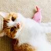 カインズのPBの猫じゃらしを購入。