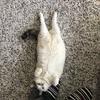 猫と大晦日