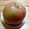 りんごの選果作業:この違い、わかりますか??