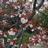 4月10日誕生日の花と花言葉