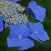 まさにロイヤルブルー王子、彩凪翔。