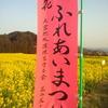 新城菜の花まつり