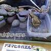 【地域情報】鶴見川流域センターに遊びに行きました