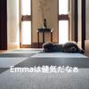2021.4.2 【忠犬Emma】毎日、健気に待機‼️ Uno1ワンチャンネル宇野樹より