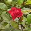 久しぶりの開花…4