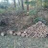 薪ストーブ始生代66 茶畑山が片付いた!そして集まったくぬぎの総量を大公開