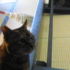 【ご報告】どらやきちゃん、旅猫ロマンが大好きです