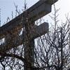 家の近所の散歩でも3か所ほど神社巡りができる新潟の朝散歩と葉桜