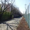 栄庭球場⓷(埼玉県 新座市)