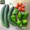 森バナ農園2021⑰ 『ミニトマト初収穫❗』