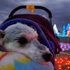 ❝マザー牧場(イルミネーション)❞  愛犬とおでかけ-千葉県観光🎵 2020年12月19日