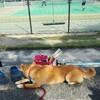 久し振りにドッグランに行ったけど、、、 ~Dog Space(滋賀県大津市)~