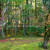 京都 高桐院「楓の庭」