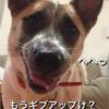 犬の噛み癖トレーニング初日
