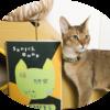 夏休みの自由研究:「猫の研究」