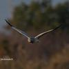 鳥撮り在庫から-群馬県