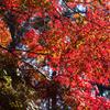 親水公園紅葉ケ池の紅葉