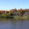 荒子川公園 2020.11.18
