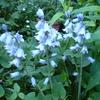 ブルーのお花。。。