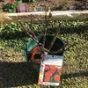 バラ(ビブレバカンス!)大苗の植え付け(地植え・冬)