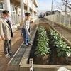 やまびこ:野菜が育っています 朝の活動