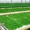 水耕栽培(NFT)を安価で導入できるシステム