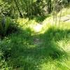 手掴みの草刈り、ウズラや蝶の住処を再建する