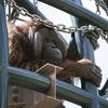 旭山動物園は開園未定ですが。