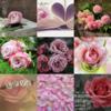Twitter、アメブロ、Instagram、Facebookに作家「瑠璃」さんの詩をご紹介しました。