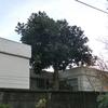 東京のまちなかで発見!こんなところにアボカドの木!その③